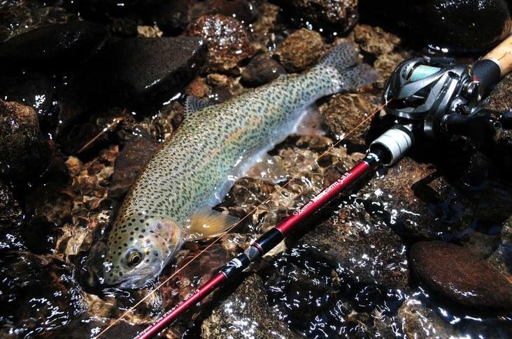 fishman_01-1