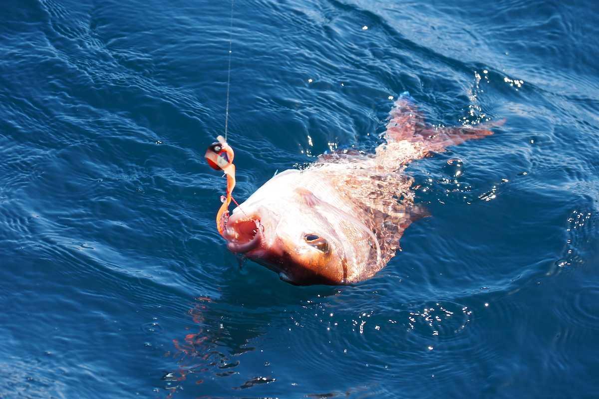 タイラバの釣り方・巻き方のコツ