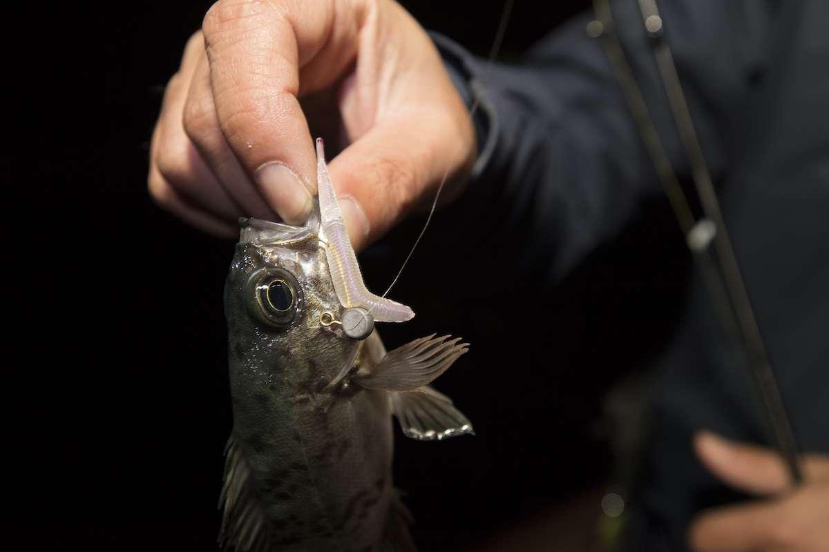 メバルのルアー釣りに適したソフトルアー(ワーム)の選び方