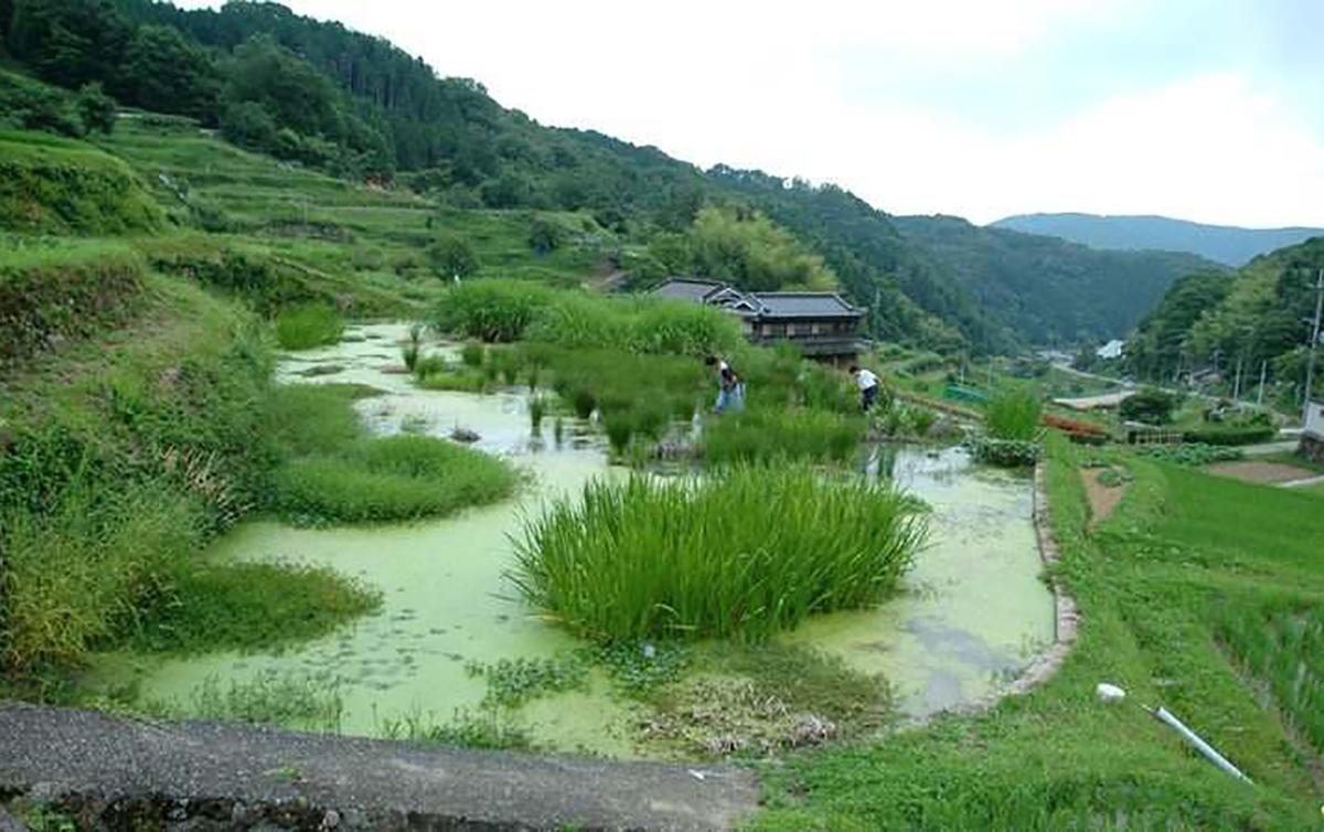 ikeda-gairaishu1904