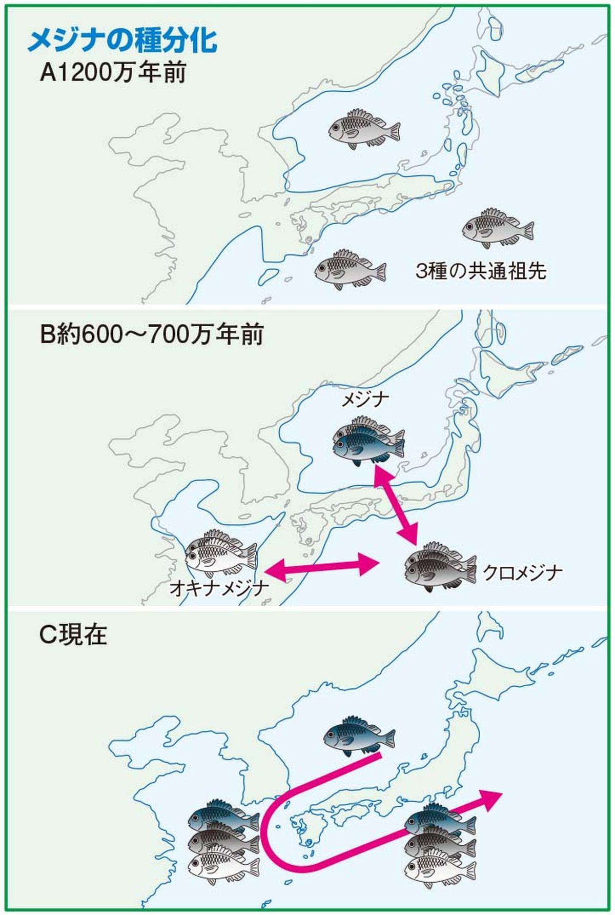 112-114mejinagaku_cs6 (17)