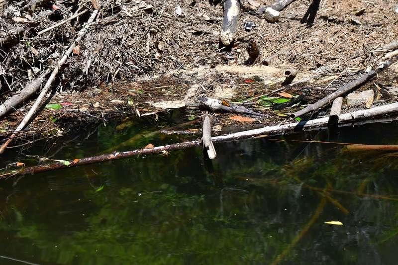 【虫ルアーの使い方:実践編】シェードもしくは浮きゴミ、浮き草がある