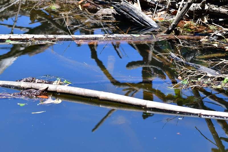 【虫ルアーの使い方:実践編】虫の真下の水中がごちゃごちゃしすぎていない