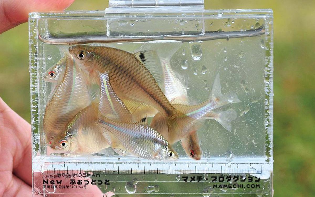 tanago-higasiura1701-1