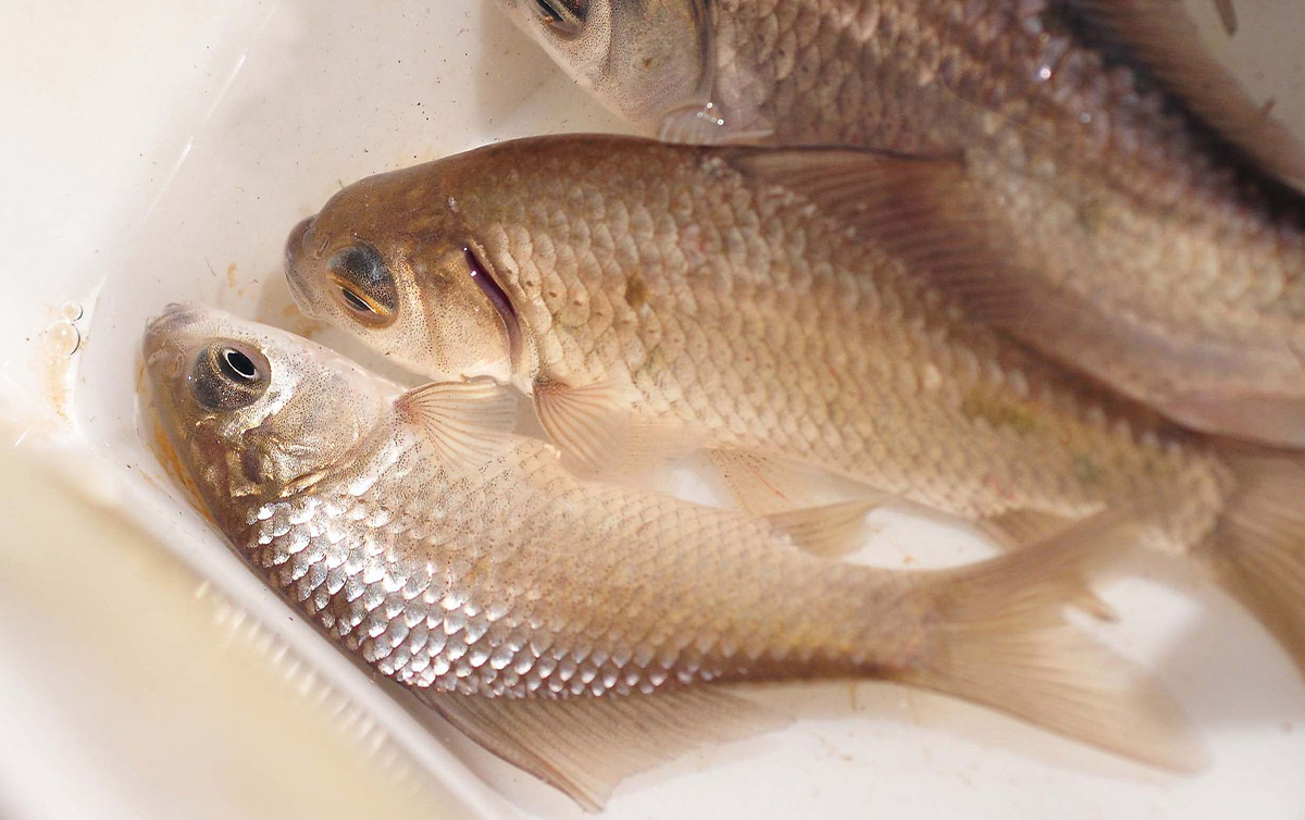 ushiku-komono